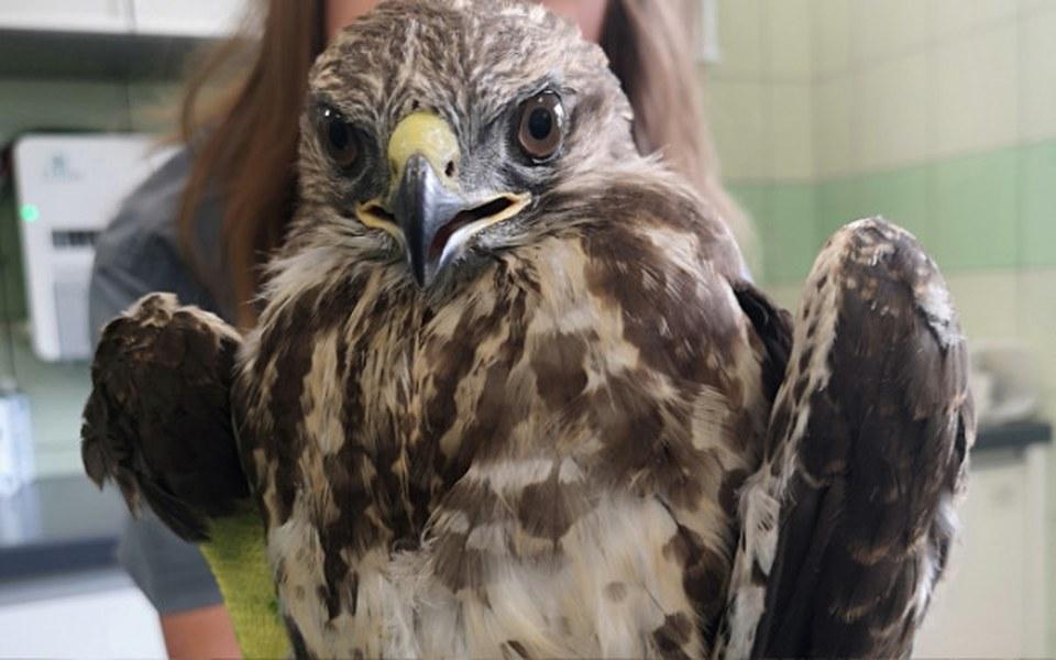 Zbiórka Ratunek dla ptaków - zdjęcie główne