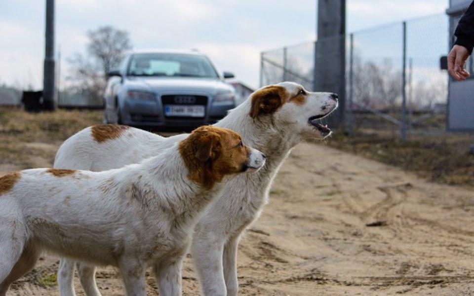 Zbiórka Romeo i Julia psy z torów - zdjęcie główne
