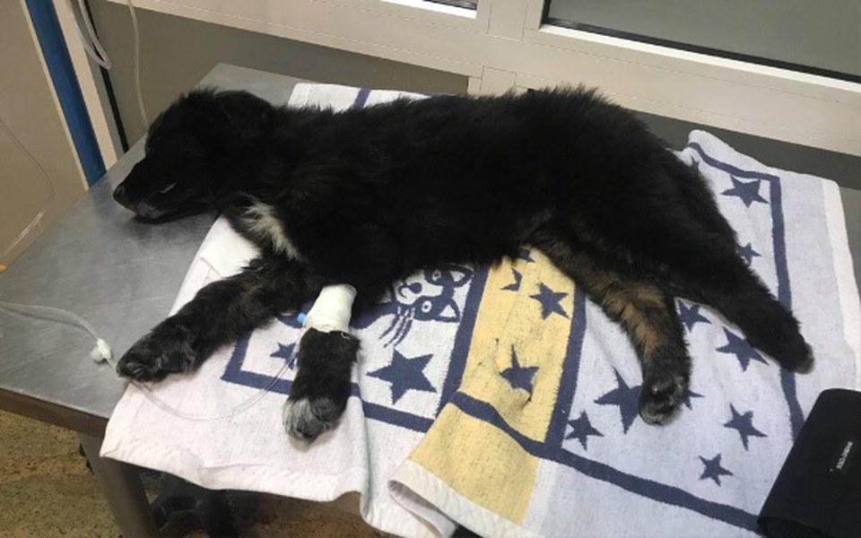 Zbiórka Pomoc w leczeniu szczeniaków 🙏🏼 - zdjęcie główne