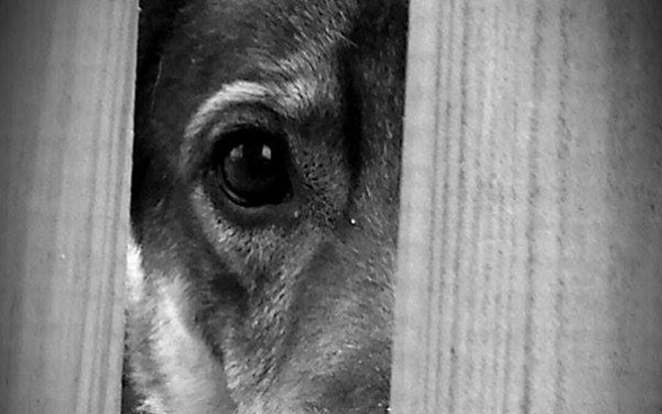 Zbiórka Tobi - od 9lat czeka na dom - zdjęcie główne