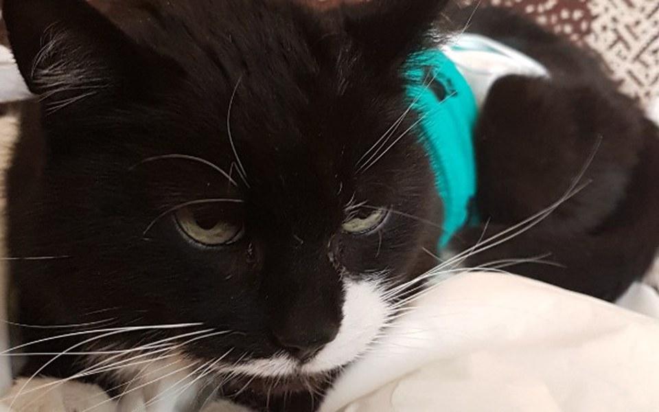 Zbiórka Pomoc dla kotki z rakiem sutka - zdjęcie główne