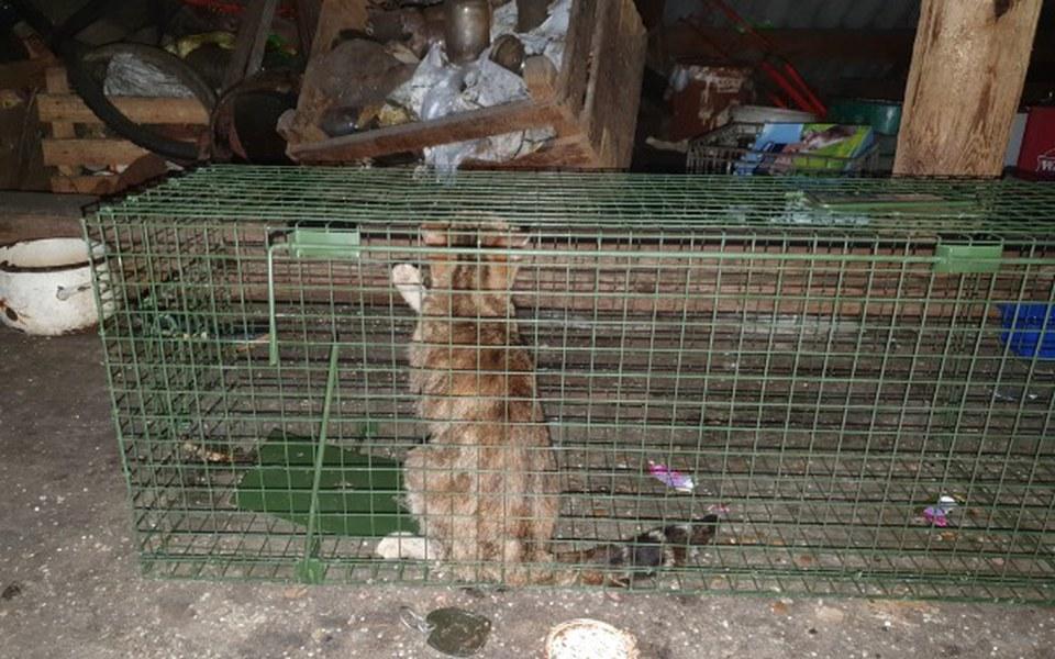 Zbiórka Kotki zamknięte na strychu - zdjęcie główne
