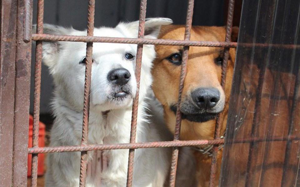 Zbiórka Obroże Foresto dla psiaków - zdjęcie główne