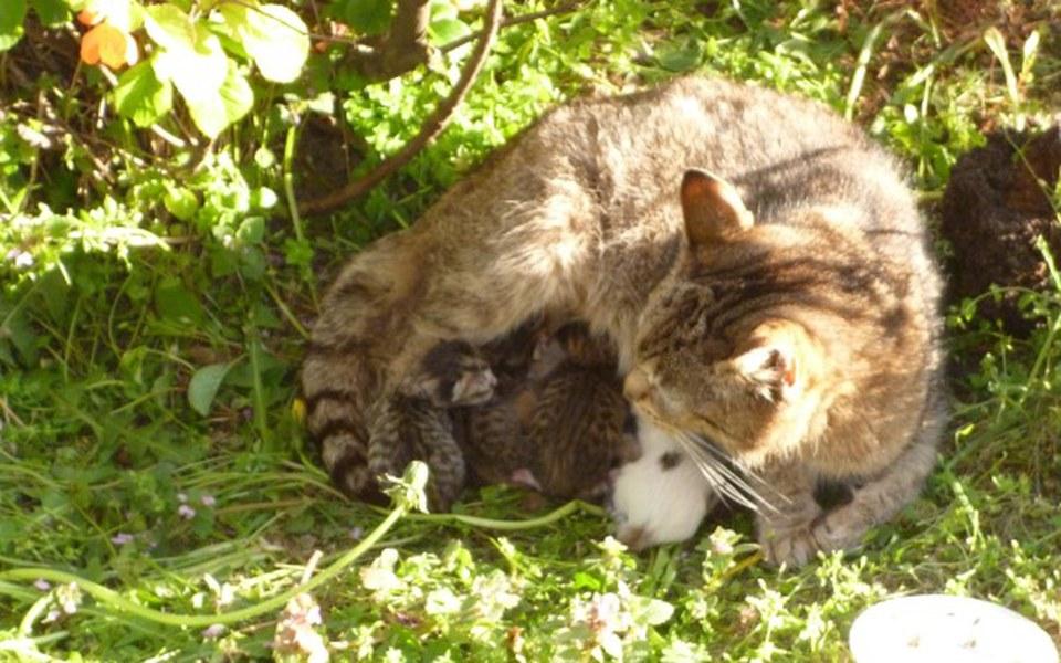 Zbiórka na mame z maluszkami z trawnika - zdjęcie główne