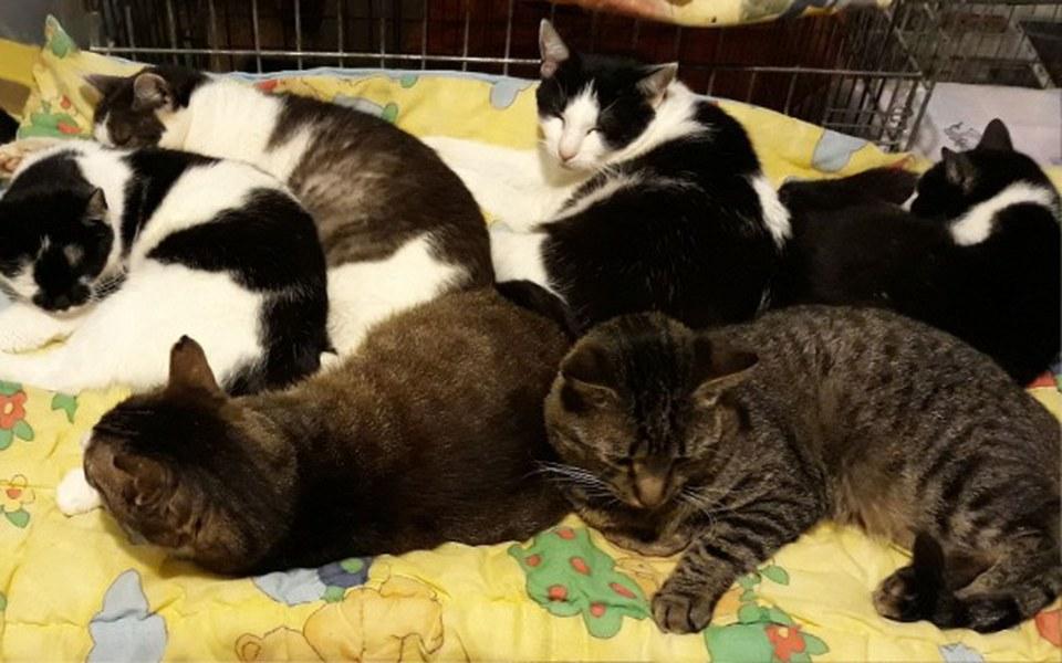 Zbiórka Leczenie i diagnostyka zwierząt - zdjęcie główne