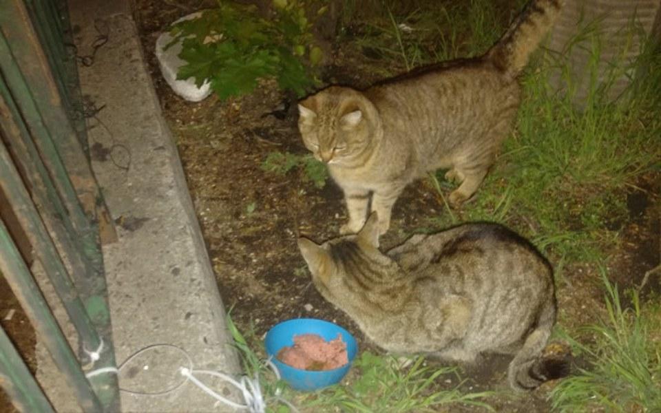 Zbiórka Nakarm koty z Kurkowej - maj - zdjęcie główne