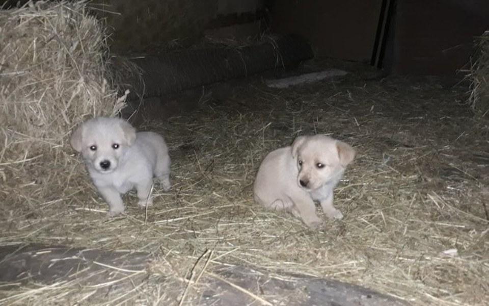 Zbiórka Na pomoc szczeniakom ze stodoły - zdjęcie główne