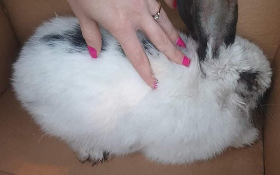 Zbiórka Ratujemy oślepionego królika - zdjęcie główne