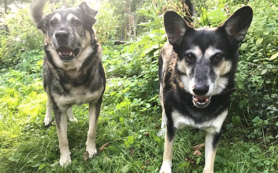 Zbiórka Uratujmy psy przed schroniskiem - zdjęcie główne