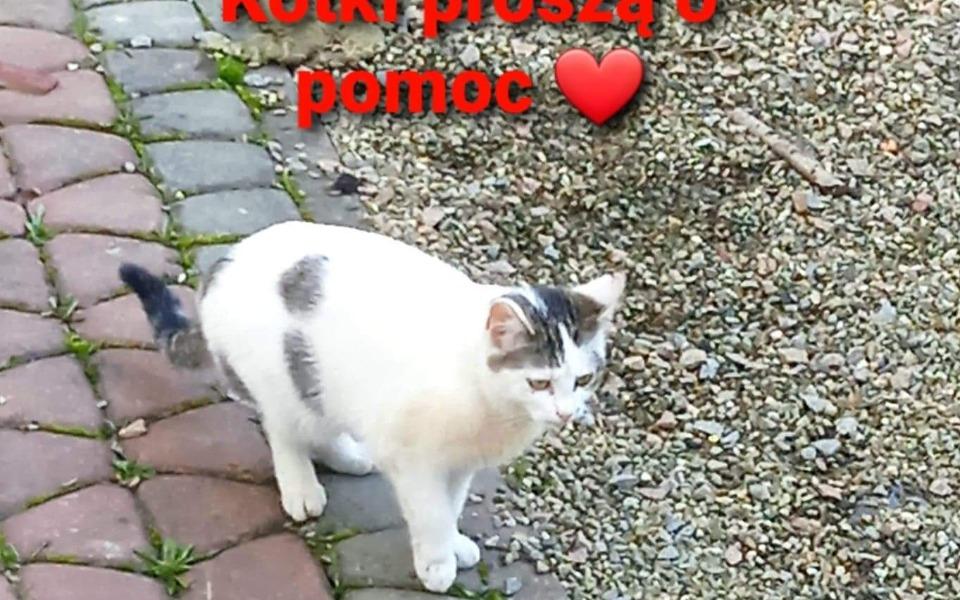 Zbiórka Pomoc bezdomnym zwierzetom koty - zdjęcie główne