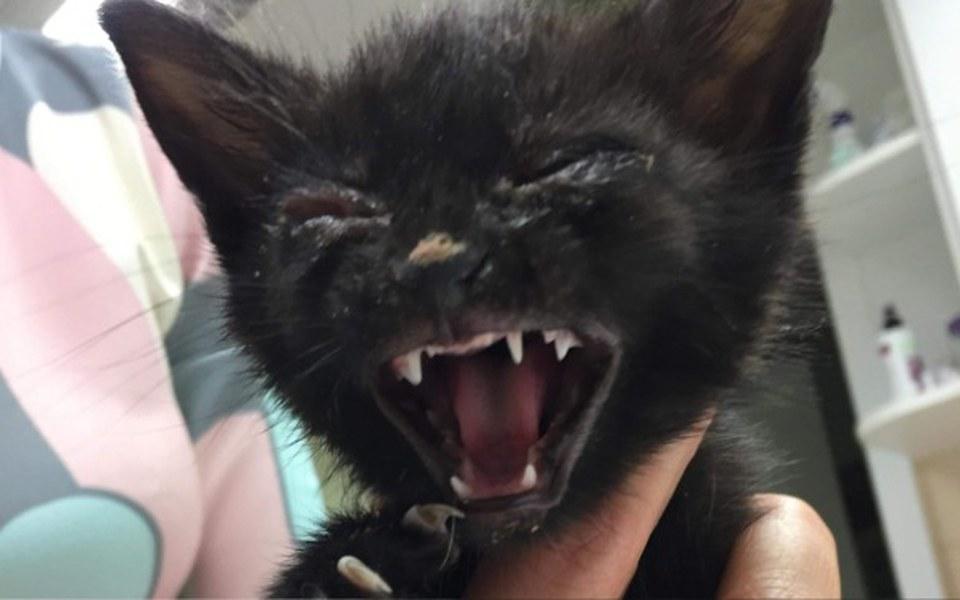 Zbiórka Na ratunek żyć kocich maleństw - zdjęcie główne