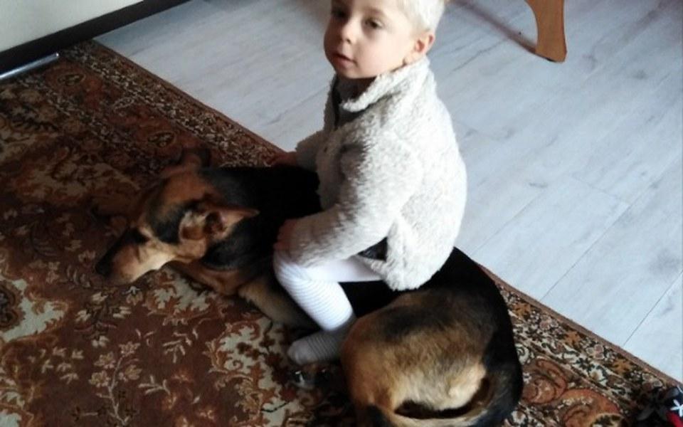 Zbiórka Dogoterapia, szkolenie psów - zdjęcie główne