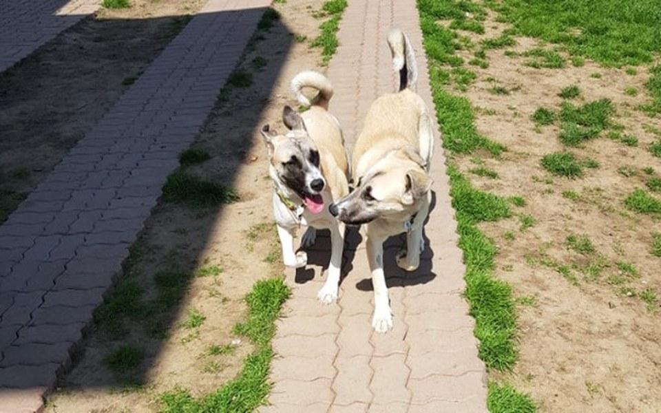 Zbiórka Daisy i Rubi zbierają na hotel - zdjęcie główne