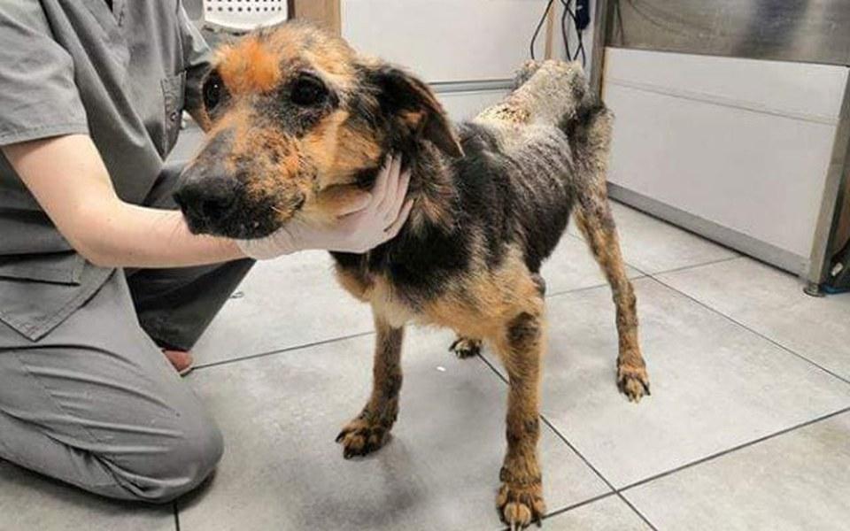 Zbiórka Saba - pies skazany na piekło - zdjęcie główne