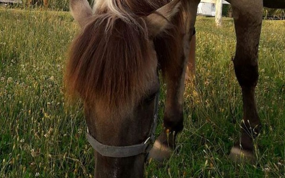Zbiórka MAZIBA  - koń rehabilitant - zdjęcie główne