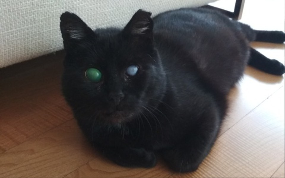 Zbiórka Dla Syriusza, kotka ślepaczka - zdjęcie główne