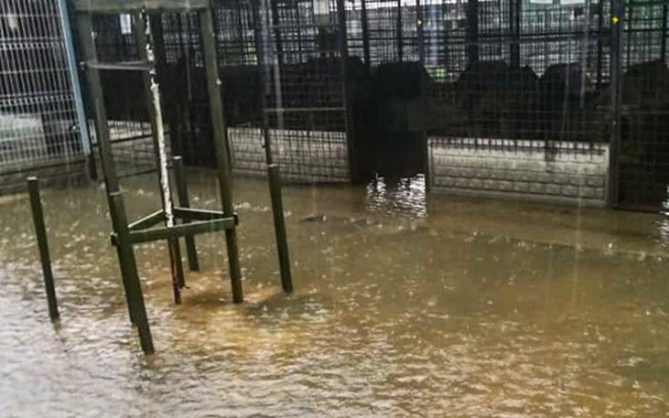 Zbiórka Remont schroniska po zalaniu! - zdjęcie główne