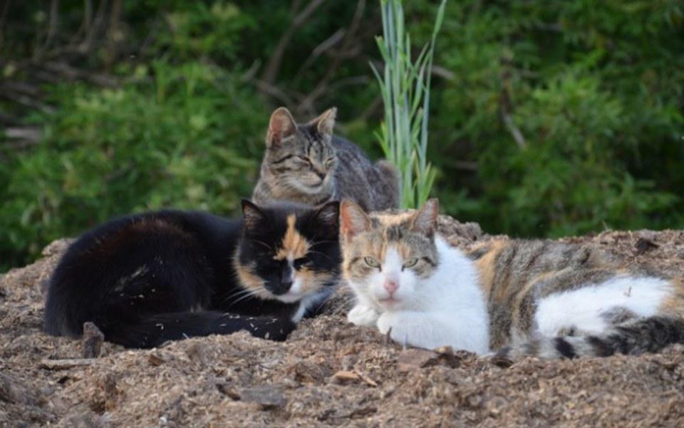 Zbiórka Prezent dla My 3, koty i psy - zdjęcie główne