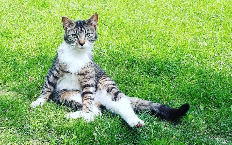 Zbiórka Jedzenie dla działkowych kotów - zdjęcie główne