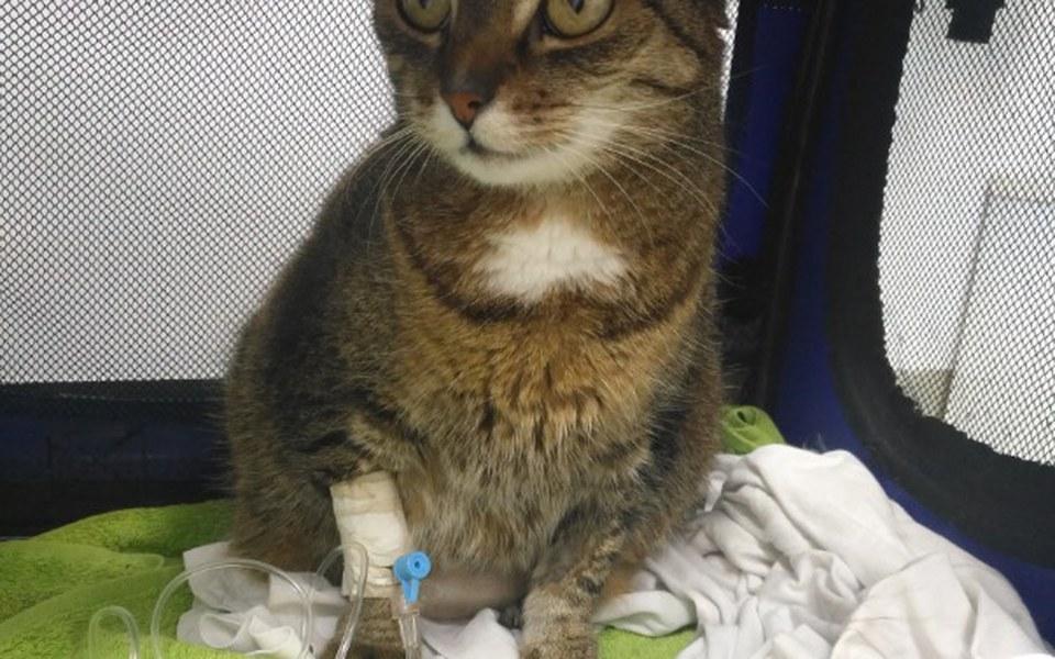 Zbiórka Transfuzje krwi dla kota :( - zdjęcie główne