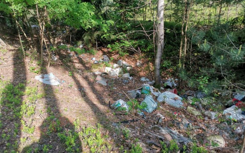 Zbiórka Fotopułapki dla czystych lasów! - zdjęcie główne