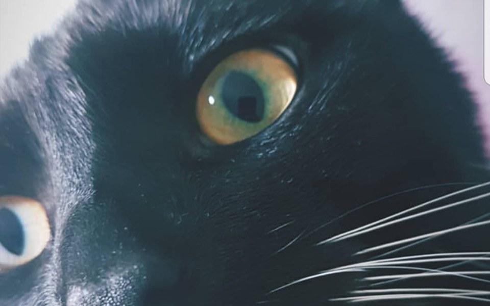 Zbiórka Wspomóż kota Filemona - zdjęcie główne