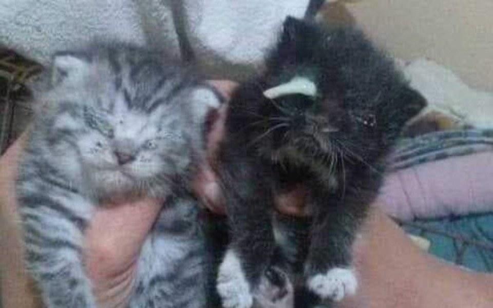Zbiórka Rajskie kocięta błagają o pomoc! - zdjęcie główne