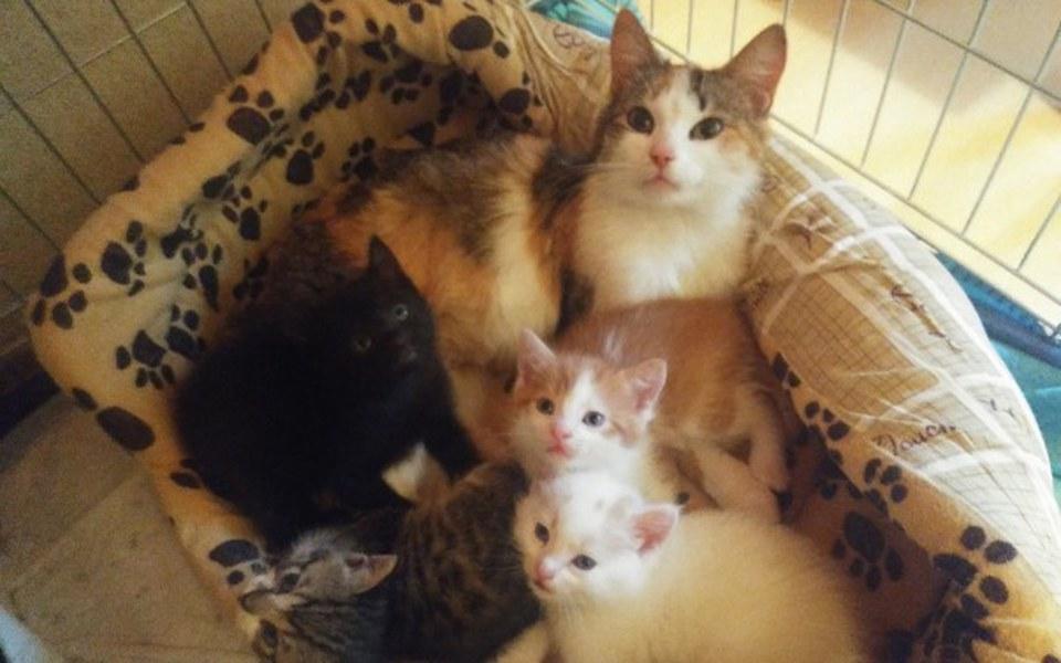 Zbiórka Porzucona kocia rodzinka - zdjęcie główne