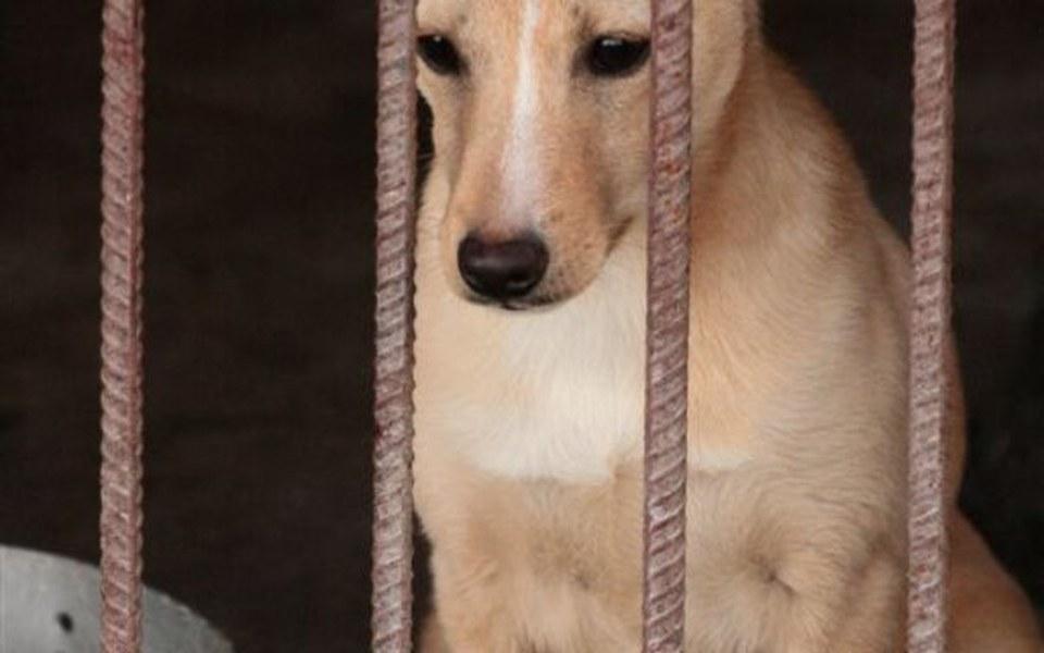 Zbiórka Ratunek dla bezdomnych psów - zdjęcie główne