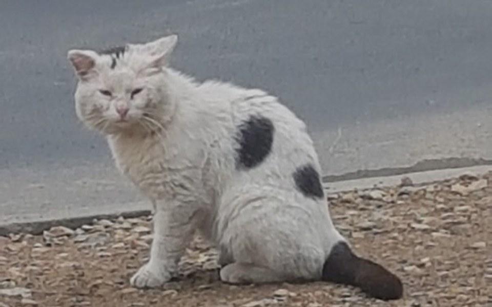 Zbiórka Koty wiejskie czyli niczyje? - zdjęcie główne