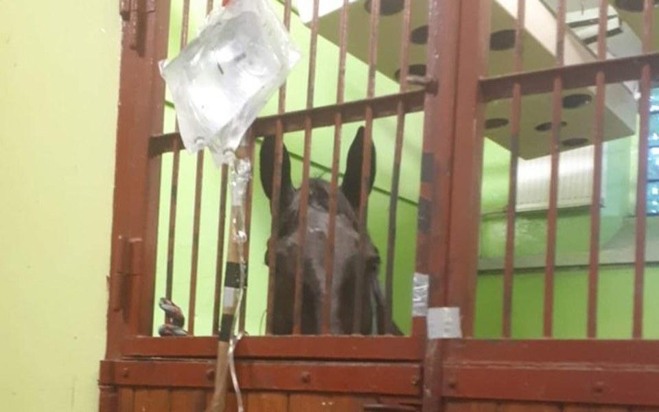 Zbiórka Niewydolność nerek u konia - zdjęcie główne