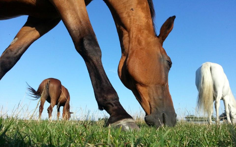 Zbiórka Pastwisko dla koni - zdjęcie główne