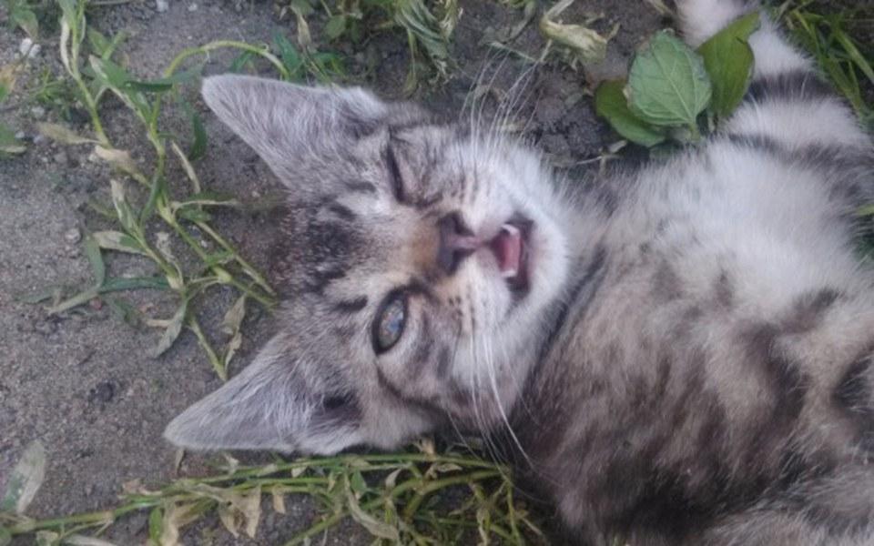 Zbiórka Dla chorego małego kotka! - zdjęcie główne