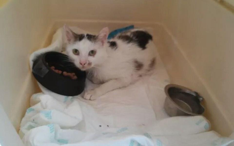 Zbiórka Kot uratowany po wypadku - zdjęcie główne