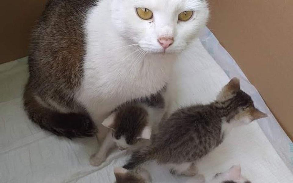 Zbiórka Wsparcie dla kociej familii - zdjęcie główne