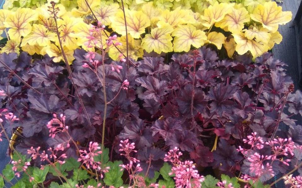 Zbiórka Ogrodnictwo moją pasją - zdjęcie główne