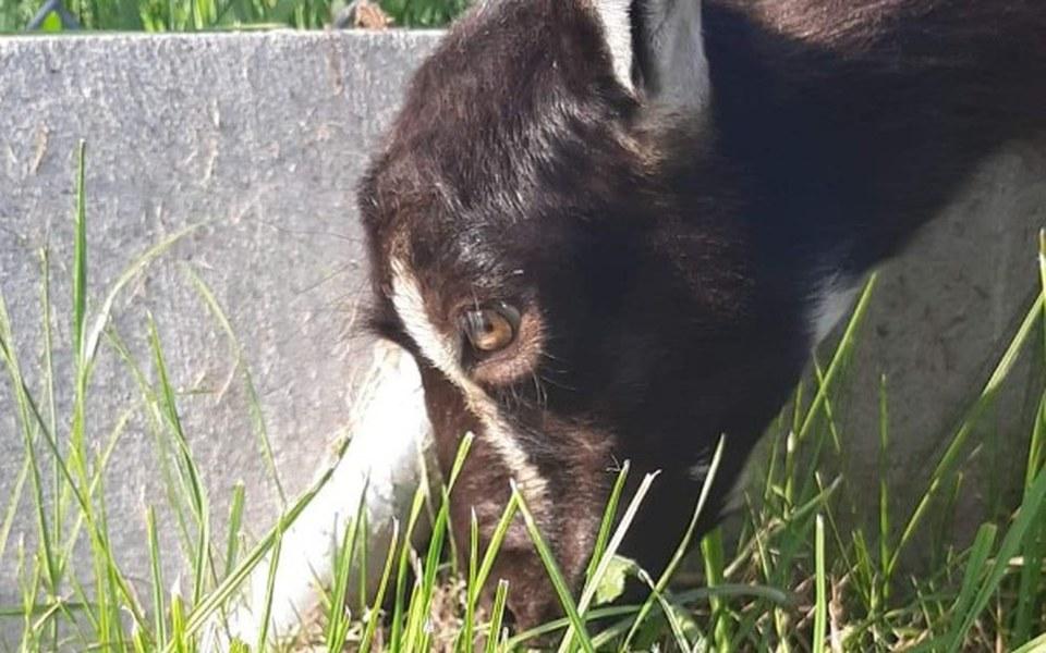 Zbiórka Ranna koza - zdjęcie główne