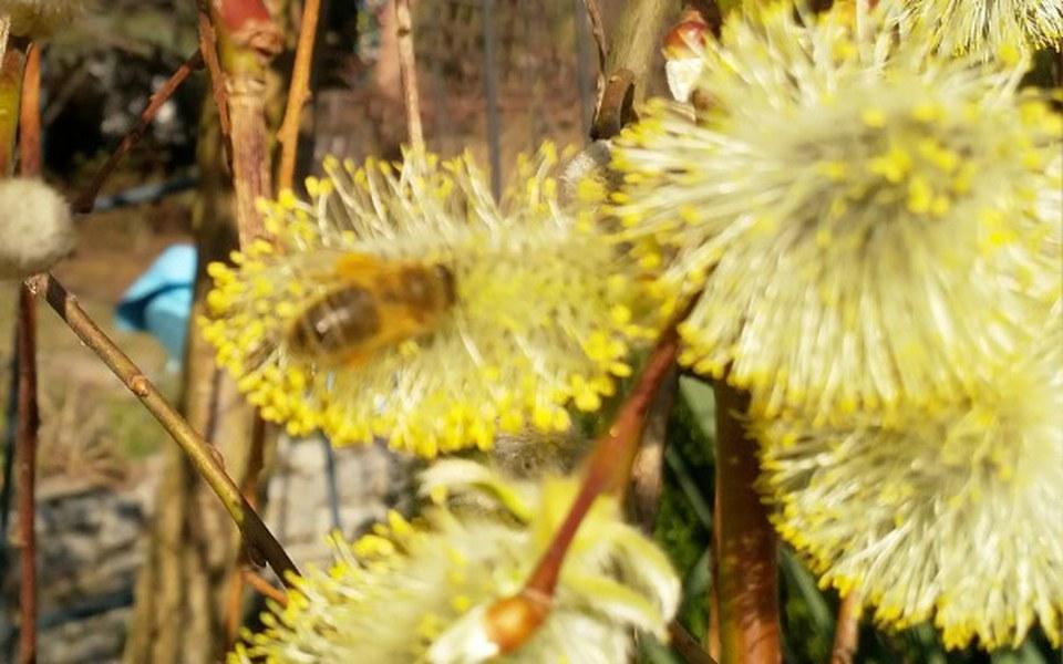 Zbiórka Ratujmy pszczoły i pszczółki - zdjęcie główne