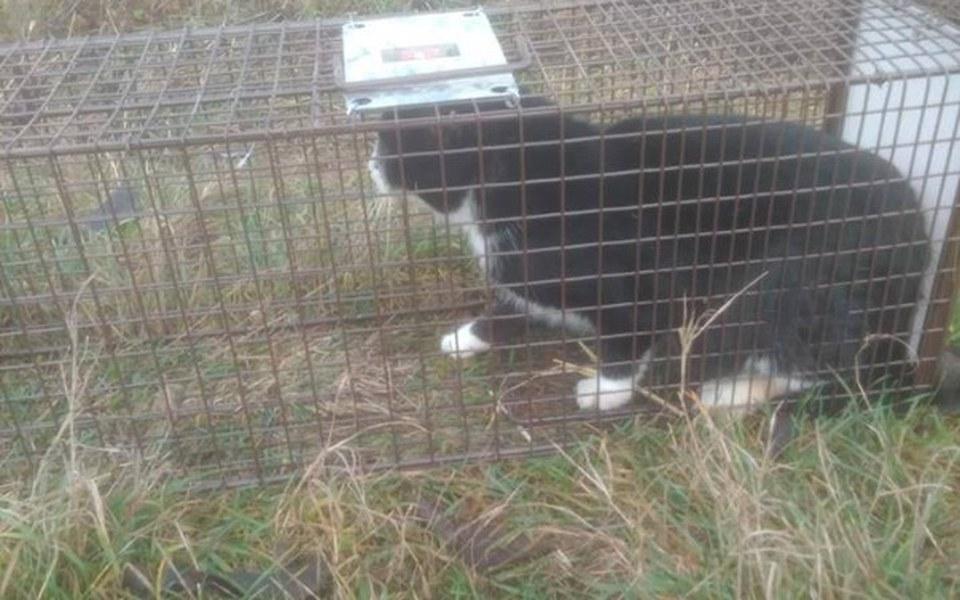 Zbiórka Sterylizacja dzikich kotów - zdjęcie główne