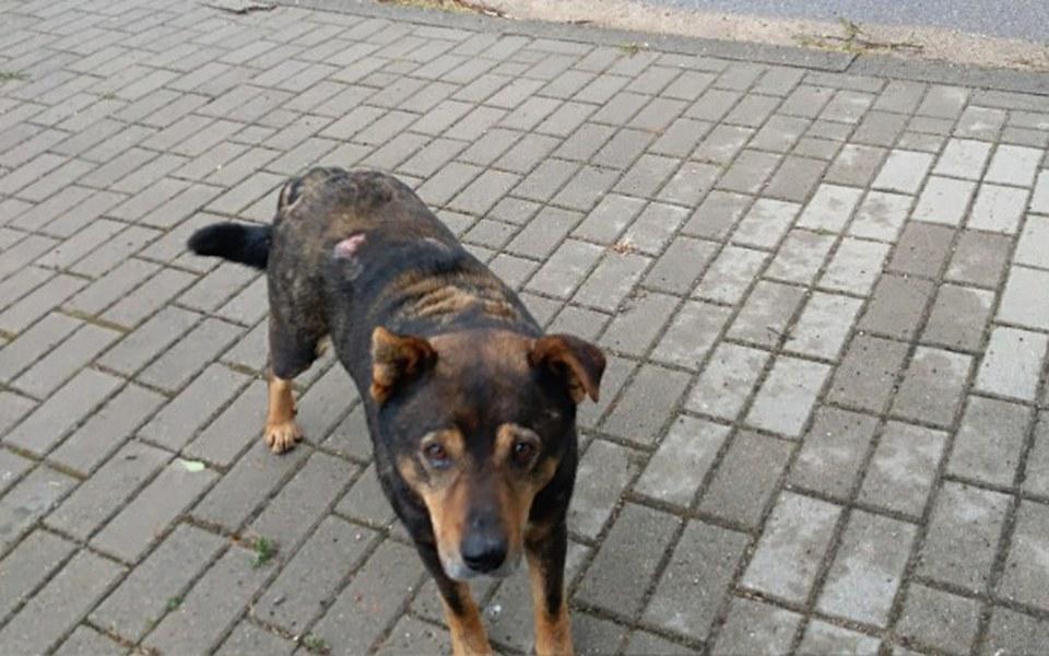 Zbiórka Pomoc bezdomnemu psu - zdjęcie główne