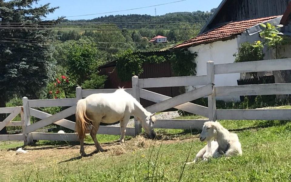Zbiórka Na ogrodzenie dla koni, sianko - zdjęcie główne