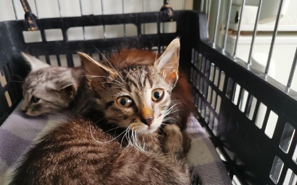 Zbiórka Kocięta ze strychu - zdjęcie główne
