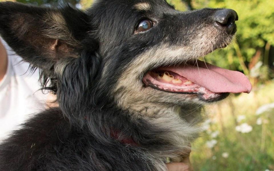 Zbiórka utrzymanie-zwierzaków - zdjęcie główne