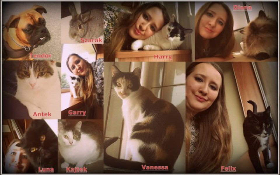 Zbiórka Mój koci kącik - zdjęcie główne