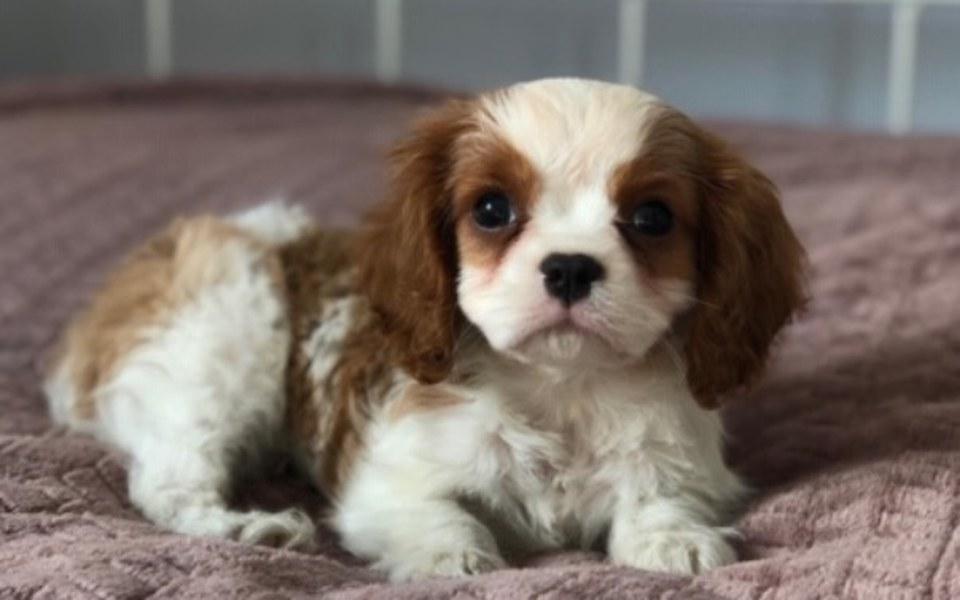 Zbiórka dogoterapia- pies i terapia - zdjęcie główne