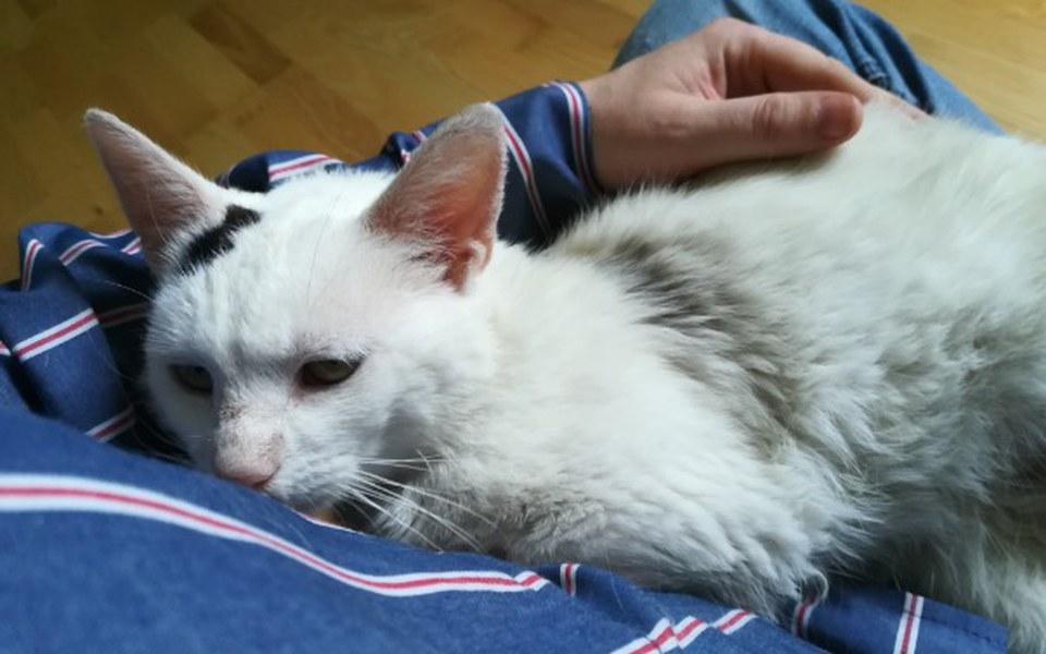 Zbiórka Rysiu - smutny koci los. - zdjęcie główne