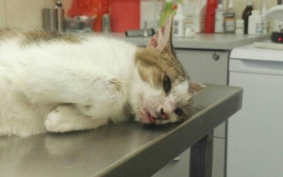Zbiórka kotka Zosia potrzebuje NAS - zdjęcie główne