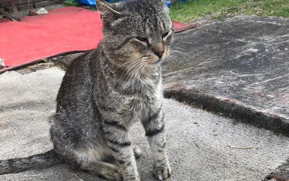 Zbiórka Koty które straciły właściciela - zdjęcie główne