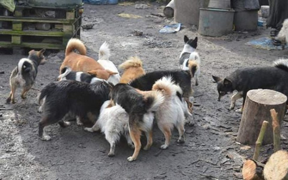 Zbiórka Stado psów i brak słów. - zdjęcie główne