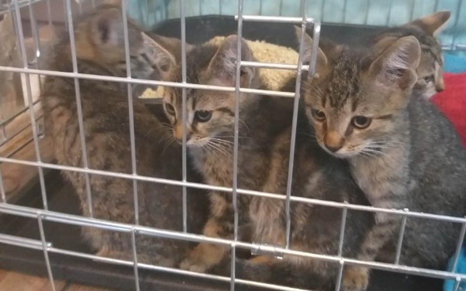 Zbiórka dla bezdomnych kotów - zdjęcie główne